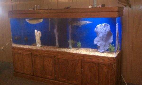 400 gallon aquarium for sale craigslist 2017 fish tank for Fish tanks craigslist