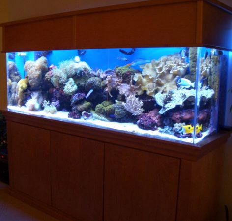 Gorgeous 300 gallon acrylic aquarium fish tank 3500 for 300 gallon fish tank