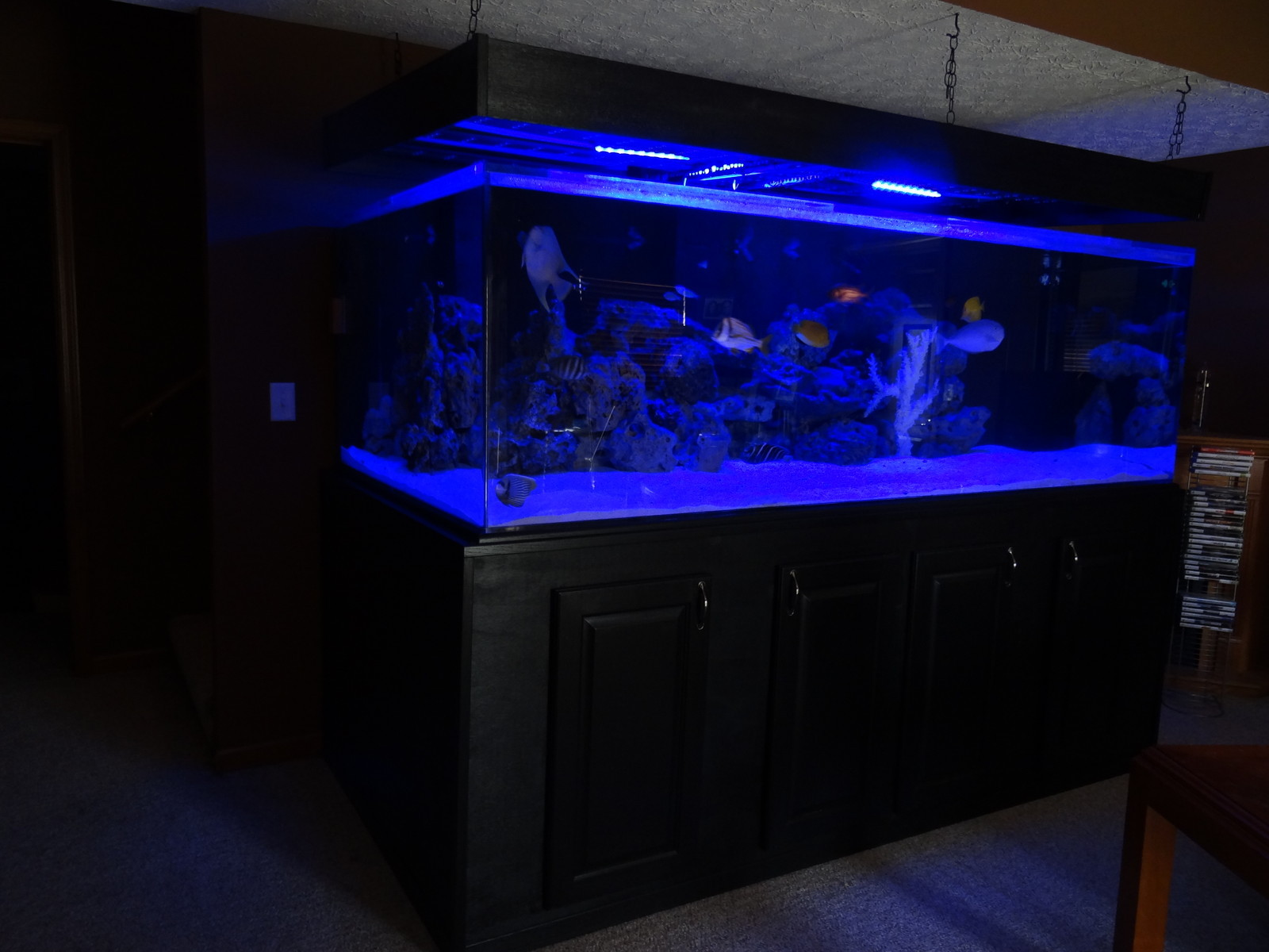 100 gallon fish tank 600 fish tank aquarium 560 gallons