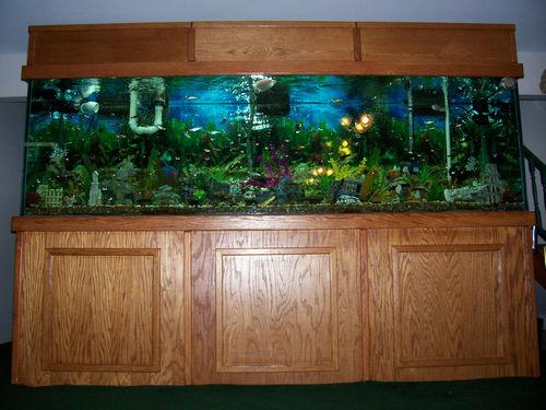 June 2012 Page 2 Giant Aquariums