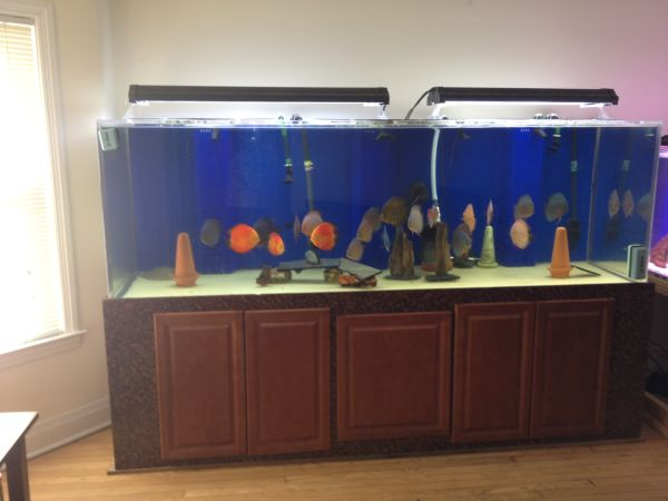 360 gallon aquarium acrylic sell or trade for 600 gallon tank 4000 60645 giant aquariums. Black Bedroom Furniture Sets. Home Design Ideas