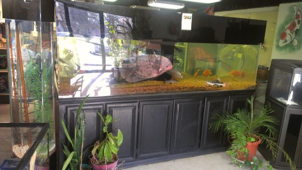 900 gallon aquarium for sale ca 900 internal aquarium for Fish tanks for sale ebay