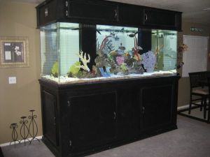 100 gallon fish tank 95 fish tank my 95 gal wavefront for 100 gallon fish tank with stand