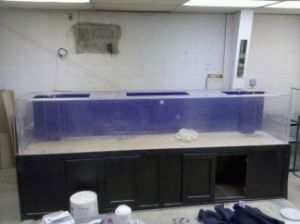 Giant aquariums tanks 300gal by trifisher page 44 for Free fish tanks craigslist