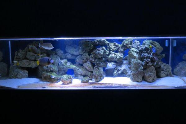 360 gallon aquarium fish tank 2500 birdsboro pa 19508 for Craigslist fish tank