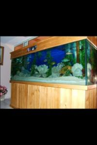 Giant aquariums tanks 300gal by trifisher page 38 for Used fish tanks for sale on craigslist