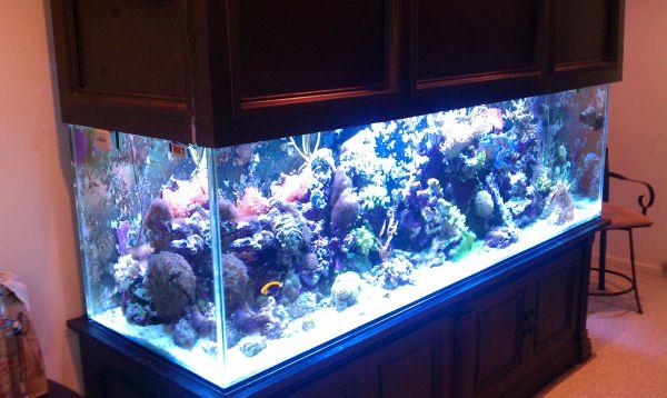 400 gallon salt water reef aquarium complete 10500 for 35 gallon fish tank