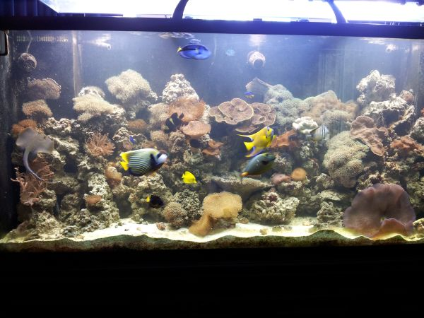 Giant aquariums tanks 300gal by trifisher page 14 for 150 gallon fish tank for sale craigslist