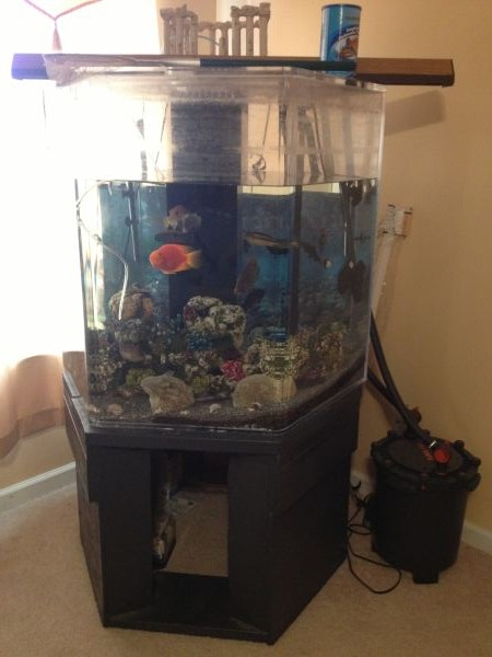 Acryllic 300 Gallon Hex Aquarium 1000 Creedmoor