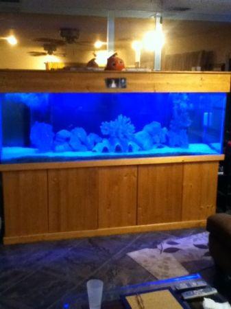 20 gallon fish tank 6000 6000 gallon reef tank reef