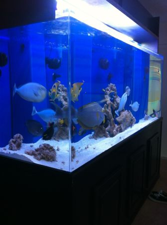400 gallon fish tank w stand canopy 6000 redondo for Free fish tanks craigslist