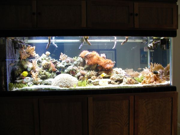 January 2013 page 5 giant aquariums for Cheap 5 gallon fish tank