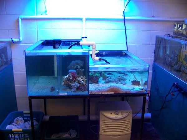 Uncategorized giant aquariums page 37 for Fish tanks craigslist