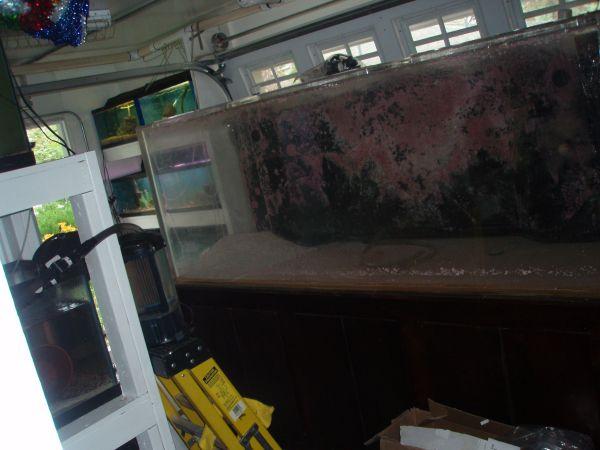 75 gallon aquarium for sale craigslist 2017 - Fish Tank ...