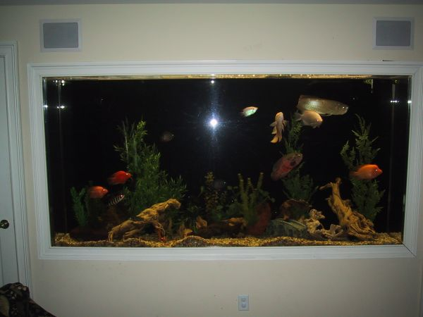January 2013 giant aquariums for Used fish tanks for sale on craigslist
