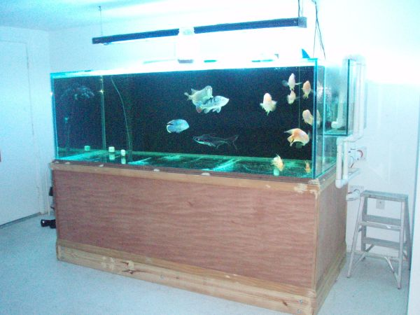 500 gallon glass fish tank 6000 holiday fl giant for Used 300 gallon fish tank for sale