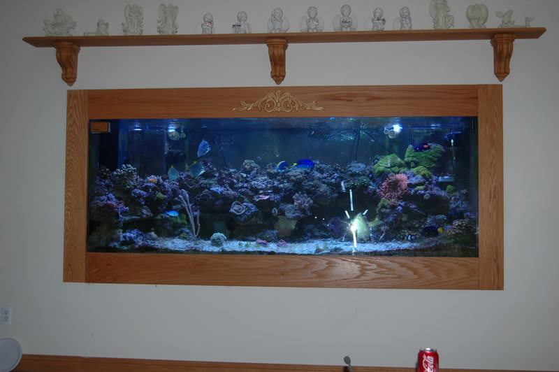 Large glass fish tank for sale 478 gal giant aquariums for Large aquarium fish