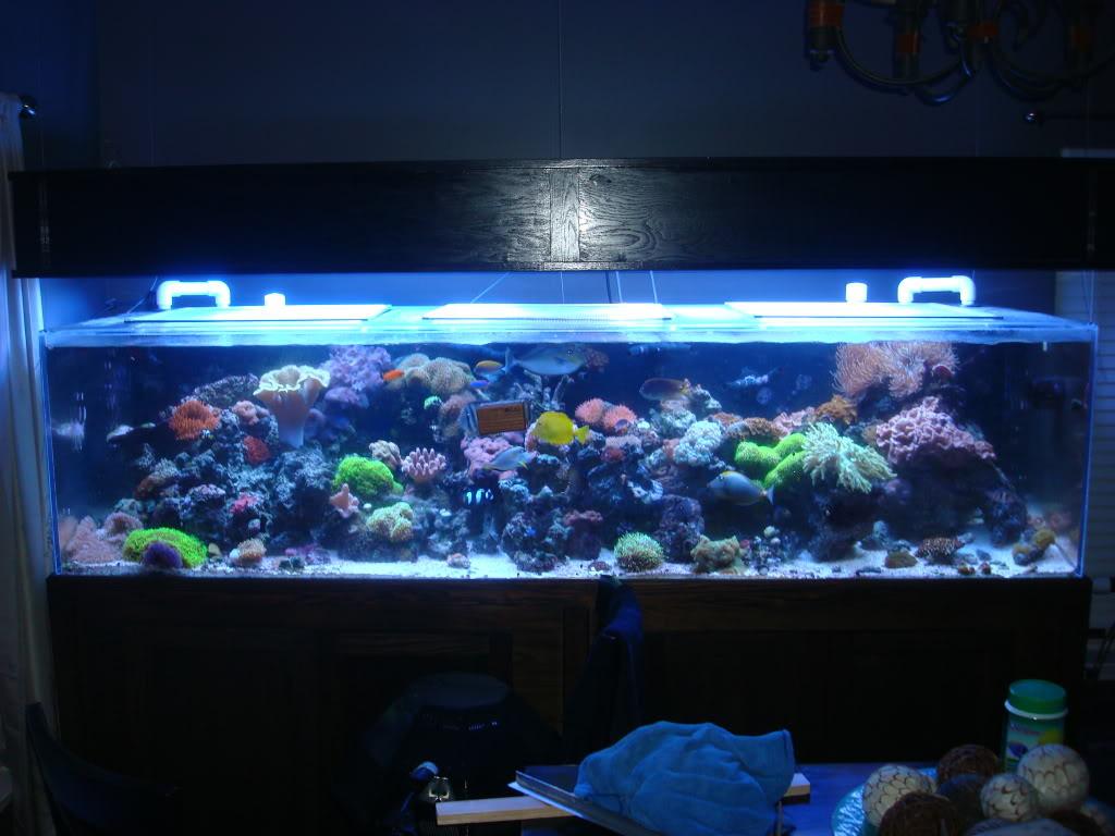 300 gallon aquarium - $2200 (Charlotte) - giant aquariums