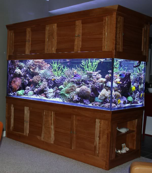 500 Gallon Tank / Stand / Canopy for sale : aquarium stands and canopies - memphite.com