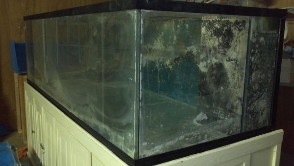 75 gallon aquarium craigslist craigslist on pinterest