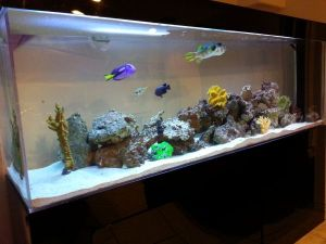 300 gallon aquarium with 350 pounds premium rock and for Bass fish tank
