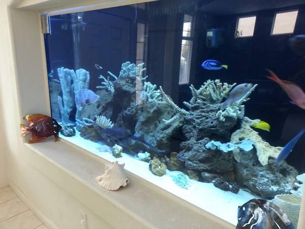 75 gallon aquarium for sale craigslist 2017 fish tank for Fish tanks craigslist
