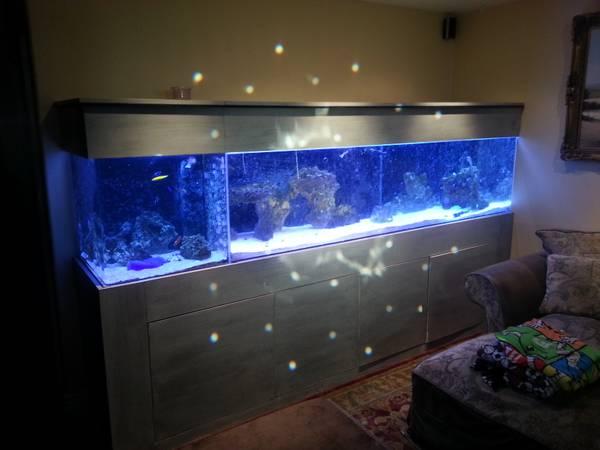 June 2013 – giant aquariums