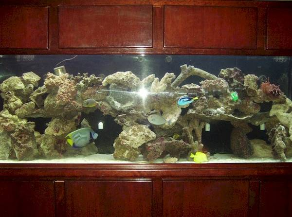 30 gallon fish tank 5000 here s the best part these new for Fish tank price