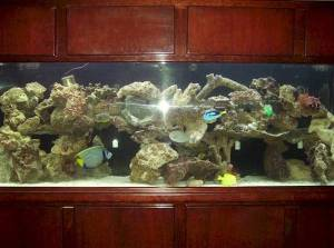 Nice 360 Gallon Acrylic Aquarium With Stand And Canopy