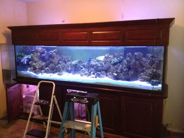480 gallon aquarium set up 10000 near the woodlands for 10000 gallon fish tank
