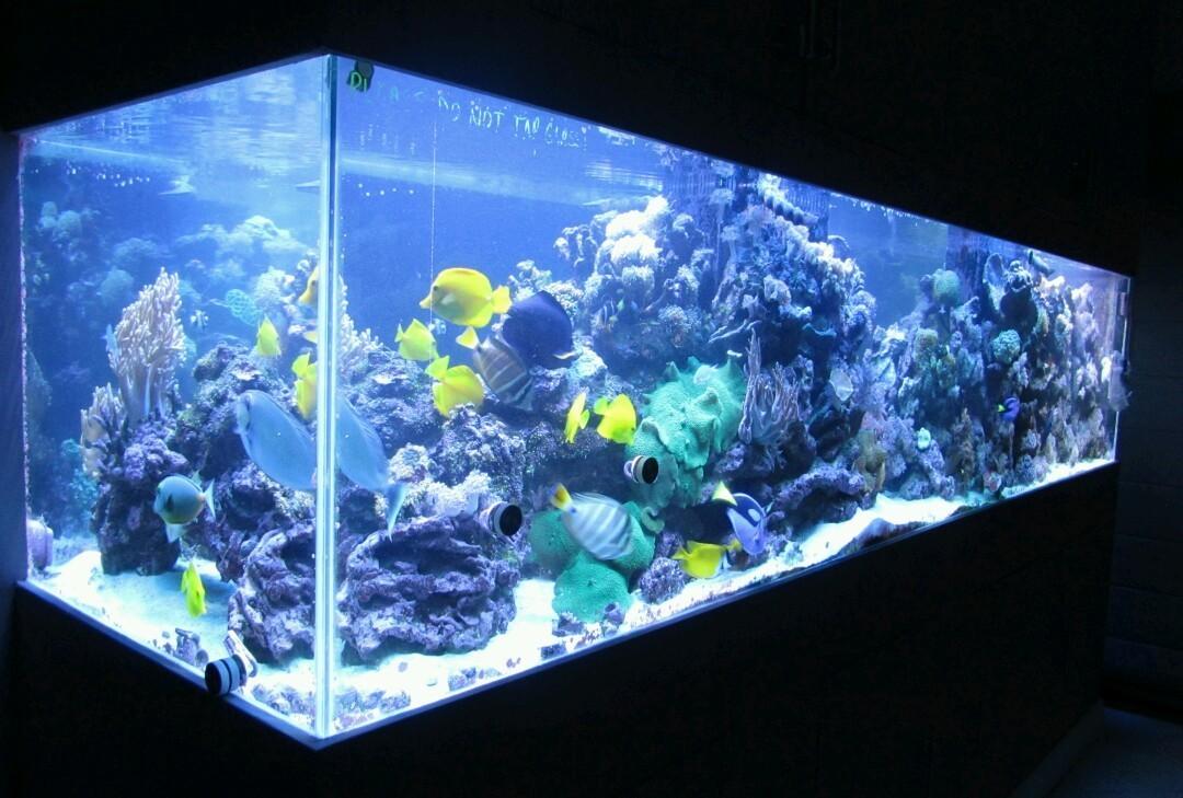 how to create saltwater aquarium