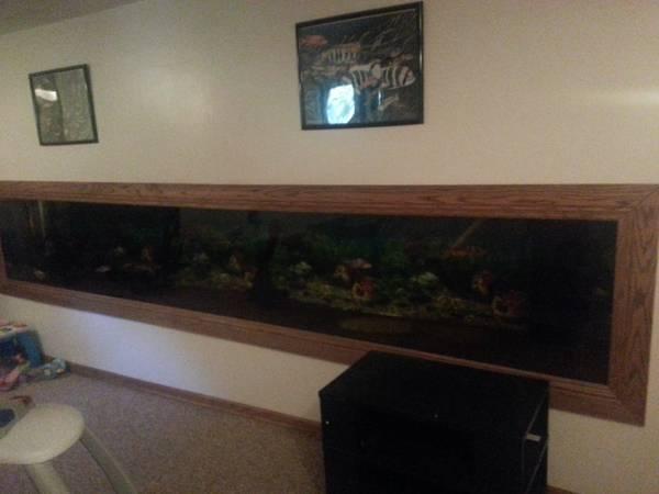 700 gallon aquarium 3750 andover giant aquariums for Fish tanks craigslist
