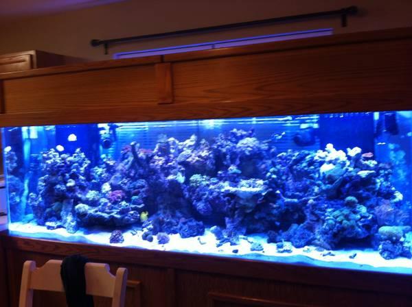 300gl Fish Tank 1799 Charlotte Giant Aquariums