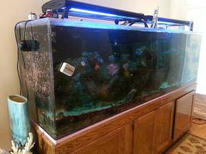 giant aquariums | Tanks 300gal.+ by Trifisher | Page 3