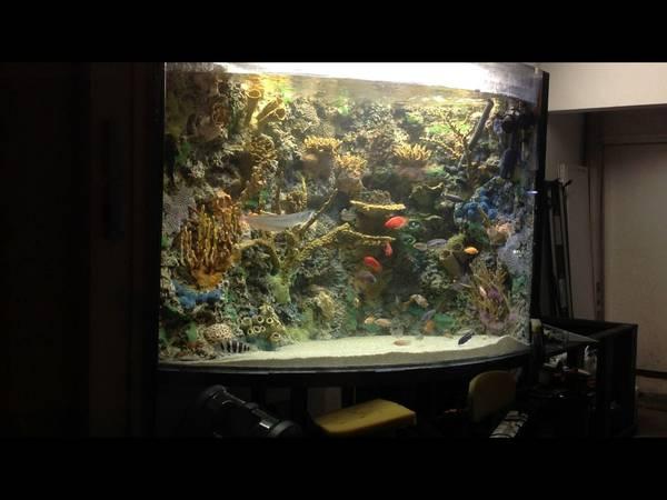 2013 Giant Aquariums Page 4