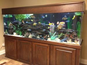 300 gallon Acrylic Aquarium African Cichlid fish tank ...