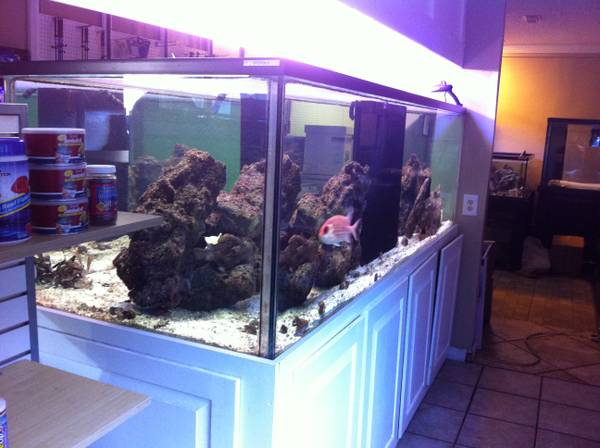 500 Gallon Aquarium For Sale 2000 Pensacola Fl