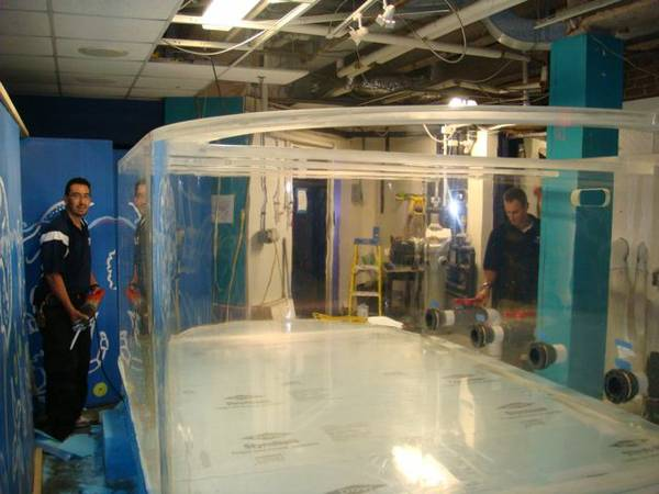Mail Order Aquarium Fish