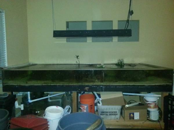 340gallon shallow reef acrylic tank setup - $1000 Ca.