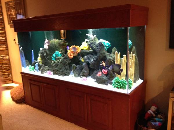 375 gallon saltwater tank - $5000 (Eagan MN)