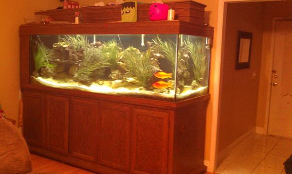 500 gallon fish tank aquarium 4000 mansfield tx