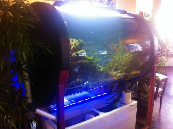 380 Gallon Saltwater Aquarium - $3500 (New Orleans)