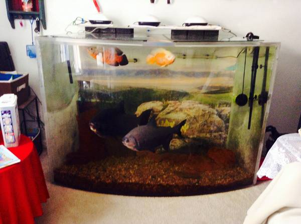 ---- 300 gallon aquarium--- - $2000 (denver area)