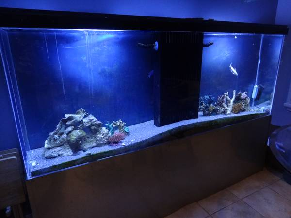 Giant aquariums tanks 300gal by trifisher page 21 for 1000 gallon fish tank for sale