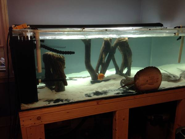 360 Gallon Acrylic AQUARIUM REEF READY - $2770 (Rogers Park,IL)