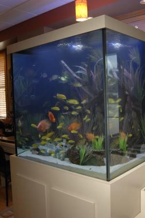 Beautiful 500 Gallon Custom Aquarium Reef Ready Or