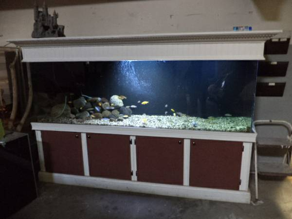 Complete 300 gal fish tank set up 1500 taylor mi for Free fish tanks craigslist