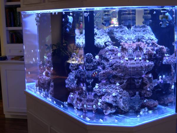 Aquarium for sale/large like new - $2000 (ashland Oregon)