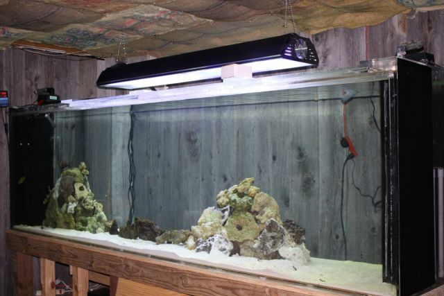 1000 + GALLON AQUARIUM ACRYLIC, REFUGIUM, LIVE ROCK, SALT WATER UP AND RUNNIN