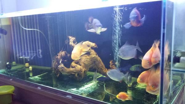 500 gallon glass fish tank - $1500 (holiday,fl)